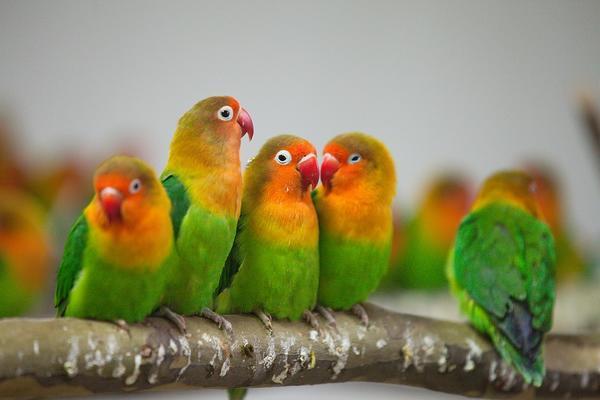 郑州聊吧-经过检疫隔离后 万只鹦鹉郑州市动物园内迎新年(3)