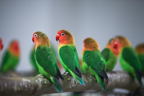 郑州聊吧-经过检疫隔离后 万只鹦鹉郑州市动物园内迎新年(2)