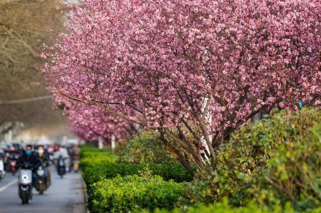 郑州聊吧-花开四季,我在最美的郑州等你(6)