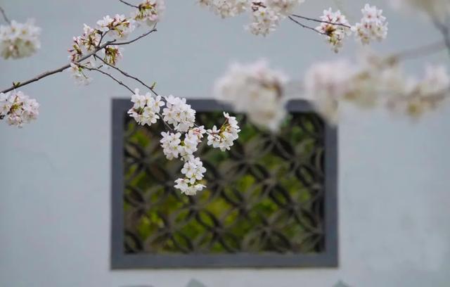 郑州聊吧-花开四季,我在最美的郑州等你(10)