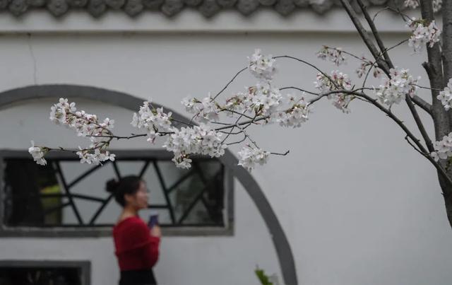 郑州聊吧-花开四季,我在最美的郑州等你(9)