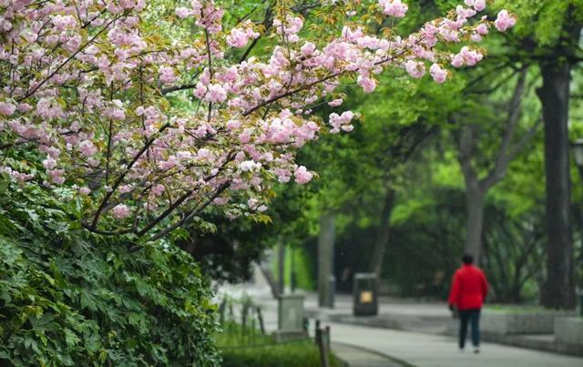郑州聊吧-花开四季,我在最美的郑州等你(16)