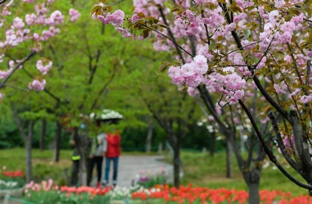 郑州聊吧-花开四季,我在最美的郑州等你(15)