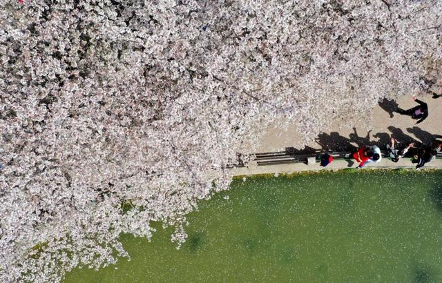 郑州聊吧-花开四季,我在最美的郑州等你(13)
