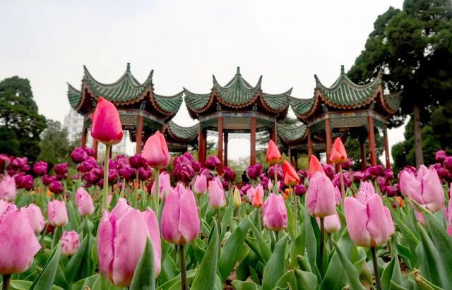 郑州聊吧-花开四季,我在最美的郑州等你(17)