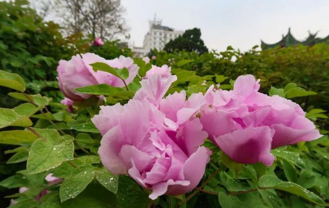 郑州聊吧-花开四季,我在最美的郑州等你(20)