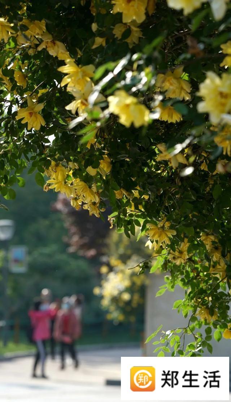 郑州聊吧-花开四季,我在最美的郑州等你(27)