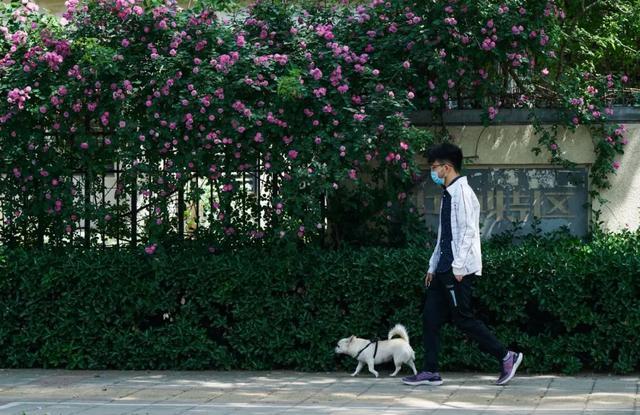 郑州聊吧-花开四季,我在最美的郑州等你(33)