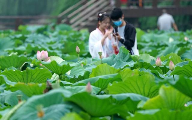 郑州聊吧-花开四季,我在最美的郑州等你(48)