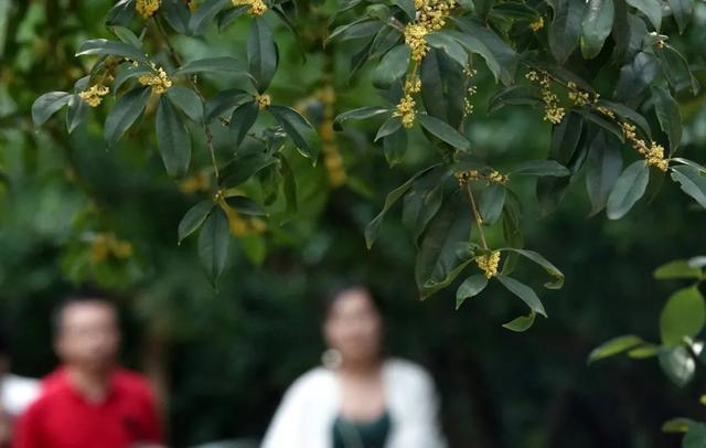 郑州聊吧-花开四季,我在最美的郑州等你(50)