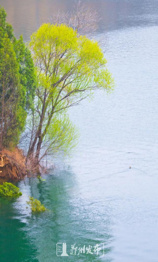 郑州聊吧-油菜花盛开!郑州这个水库的美景藏不住了(7)
